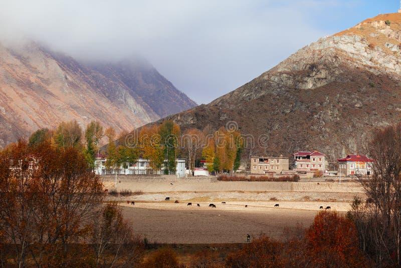Желтая деревня осени стоковые фото