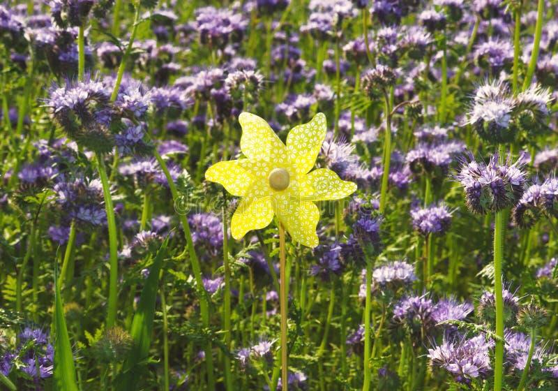 Желтая игрушка pinwheel в голубом зацветая поле стоковые изображения rf