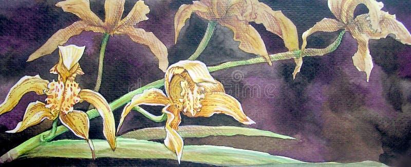 Желтая краска цветка орхидеи в цвете воды иллюстрация вектора