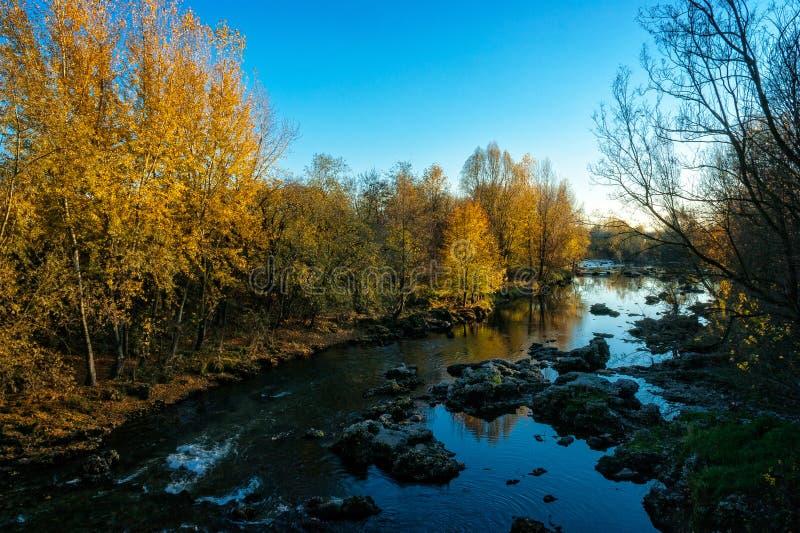 Желтая осень вдоль реки стоковое изображение