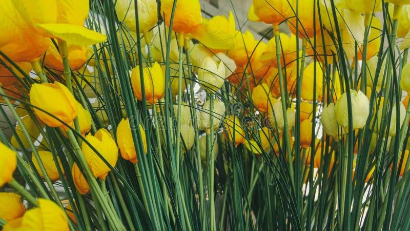Желтая предпосылка цветков тюльпана в офисе стоковая фотография