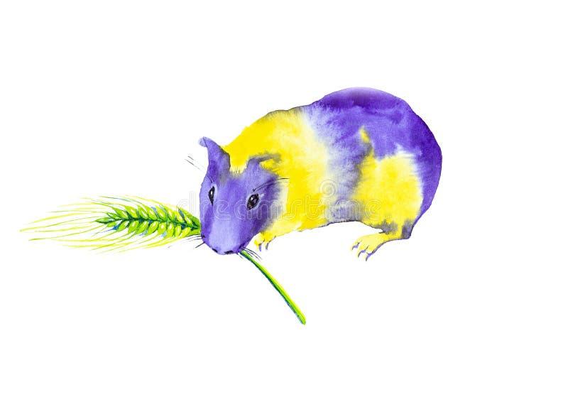 Желтая пурпурная морская свинка держит зубы в ухе пшеницы Абстрактная шуточная иллюстрация акварели белизна изолированная предпос иллюстрация вектора