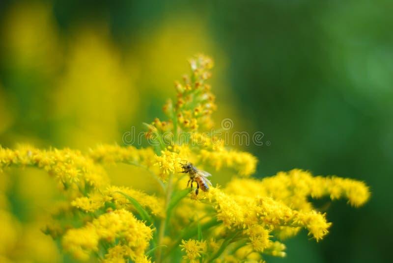 Желтая сила цветка над все 1 стоковые изображения