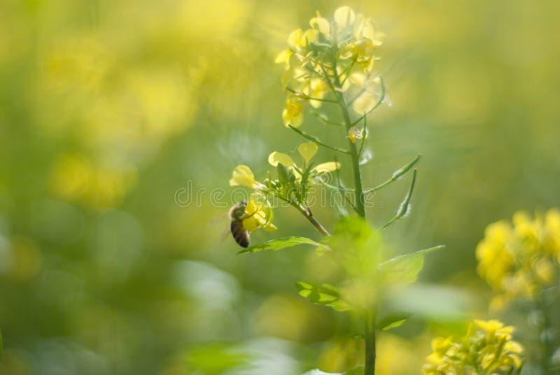 Желтая сила цветка на всем 3 стоковые изображения