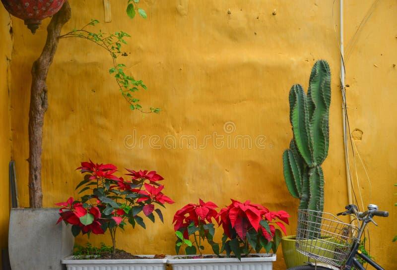 Желтая стена с красными цветками и кактусом стоковые изображения