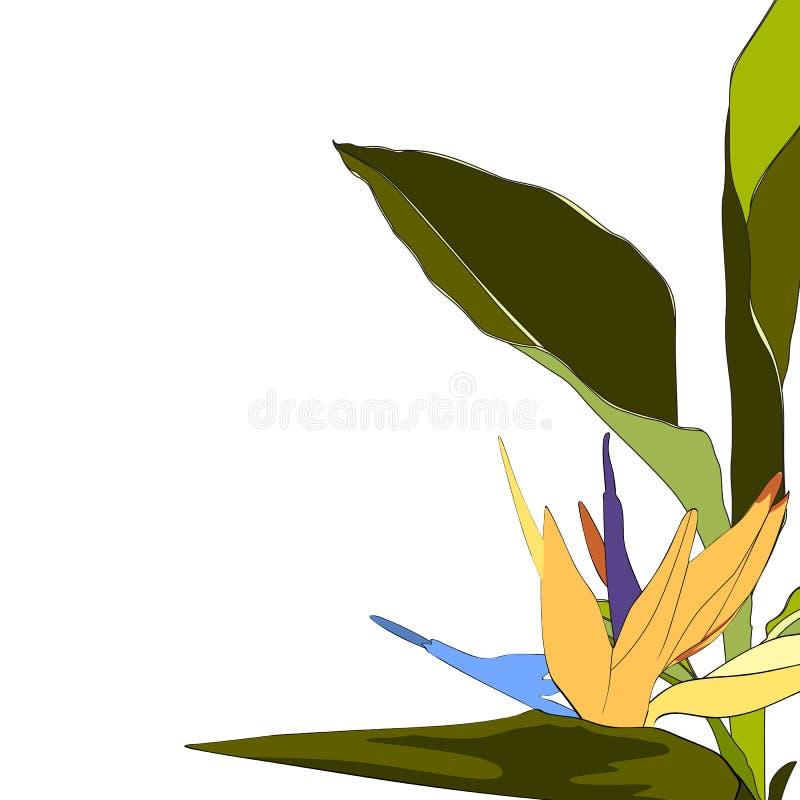 Желтая тропическая экзотическая карта букета цветков и листьев strelitzia элегантная иллюстрация вектора
