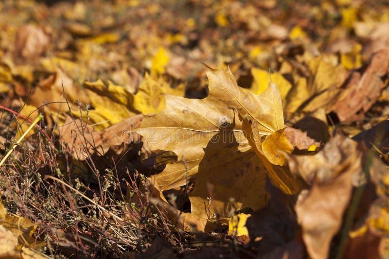 Желтое листво стоковая фотография