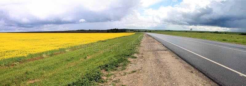 Желтое поле засеянное с рапсом стоковое фото rf