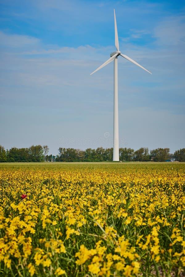 Желтое поле рапса перед ветрогенератором стоковые фотографии rf