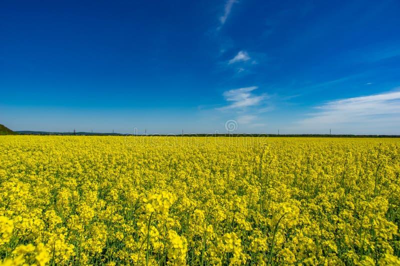 Желтое поле с зацветать канола стоковые фото