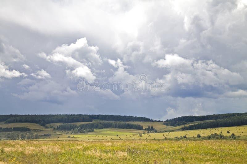 Желтое поле стоковая фотография rf