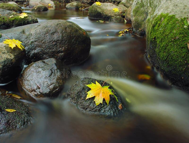 Желтое разрешение на камне в потоке воды Время осени стоковые изображения rf