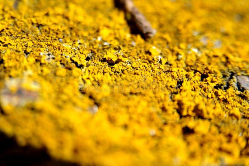 Желтое цветовое поле стоковые изображения rf
