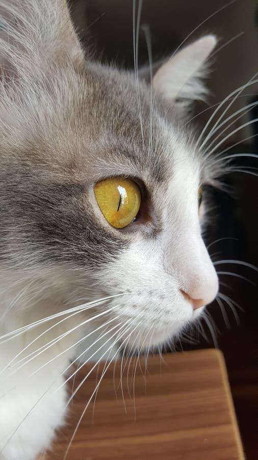 Желтые глубокие глаза стоковое изображение