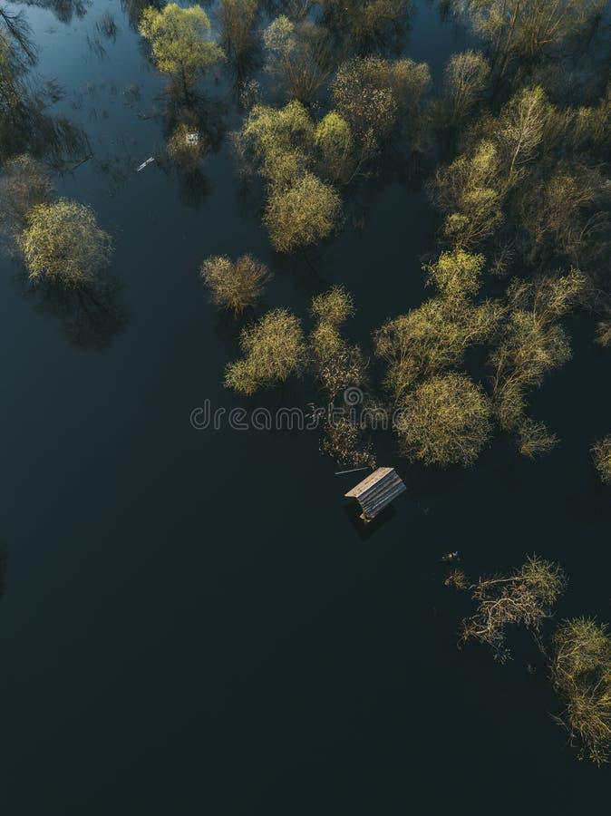 Желтые деревья в воде Затопленная сельская местность стоковая фотография rf