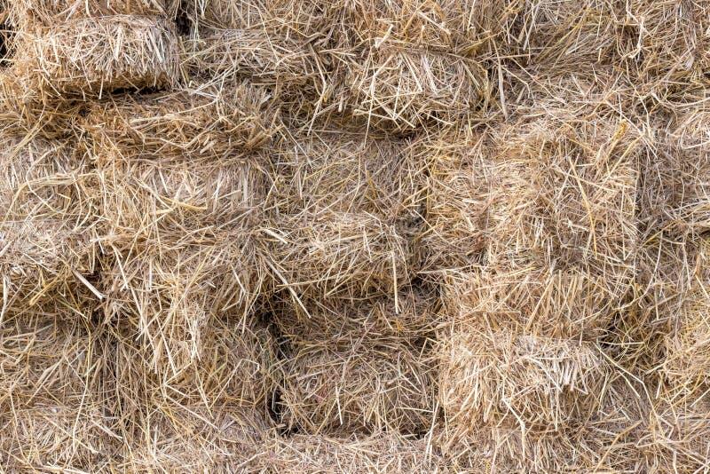 Желтые золотые связки соломы сена пшеницы штабелированной в куче в поле стерни на лете стоковое изображение