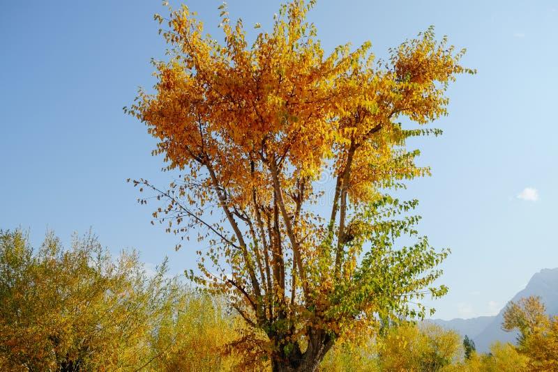 Желтые и зеленые листья в осеннем сезоне стоковые фото