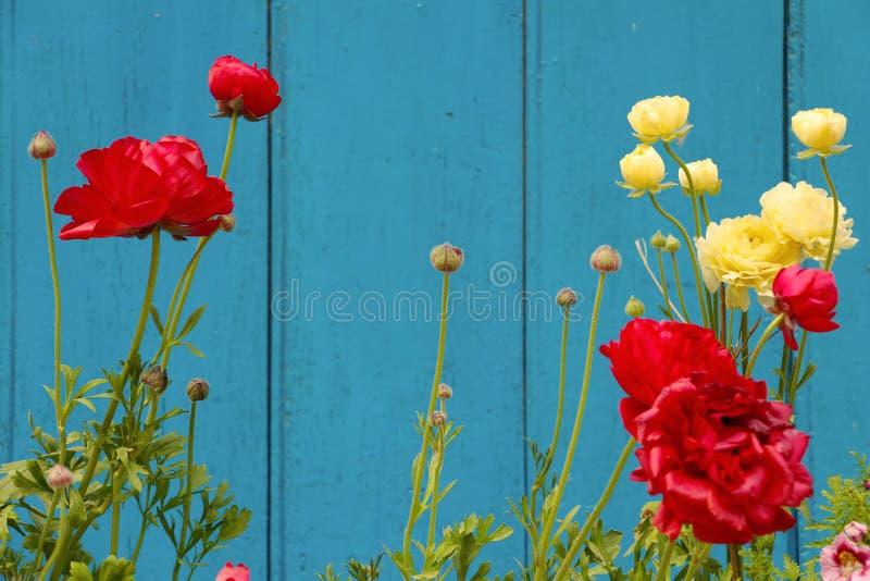 Желтые и красные цветки гвоздики на flowerbed стоковые изображения