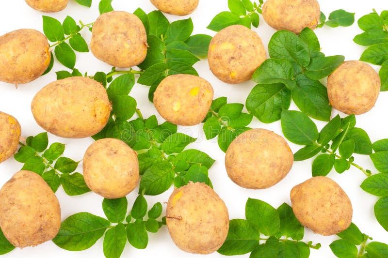 Желтые картошки с разрешением стоковые фотографии rf