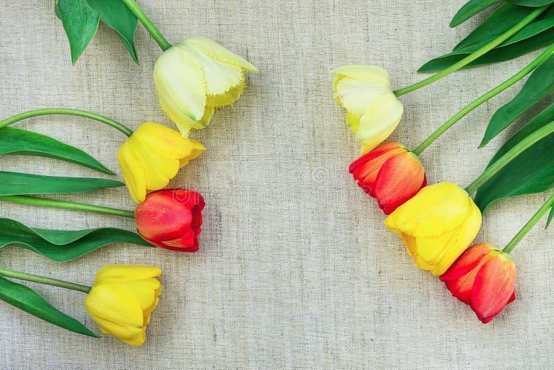 Желтые красные тюльпаны аранжировали в рамке на светлом грубом дне рождения пасхе дня ` s матери минималистичного стиля Linen тка стоковое фото rf