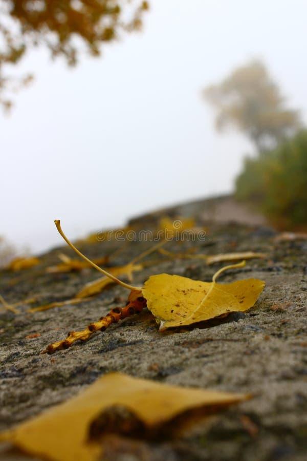 желтые листья в ландшафте осени стоковые фото