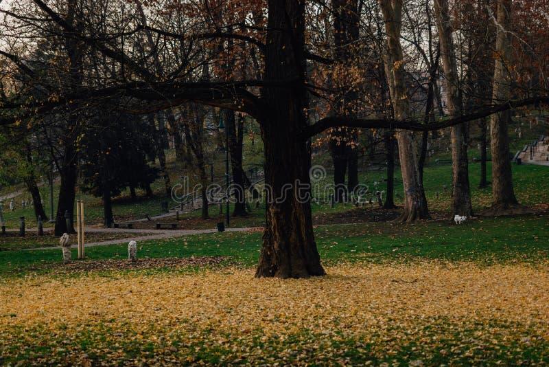 Желтые листья упаденные от дерева стоковые фотографии rf