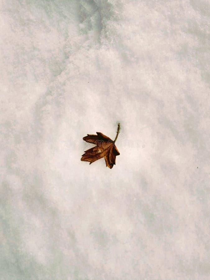 Желтые лист на снеге снега стоковое изображение rf
