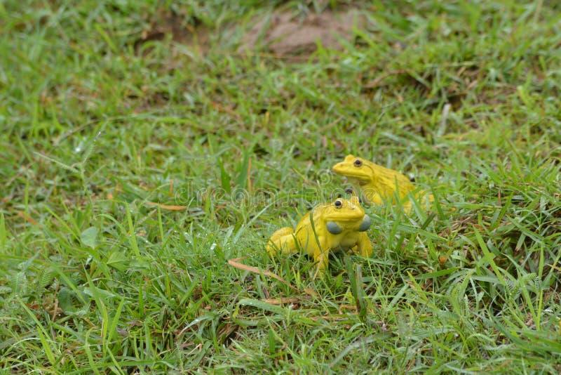 Желтые лягушки играют стоковая фотография