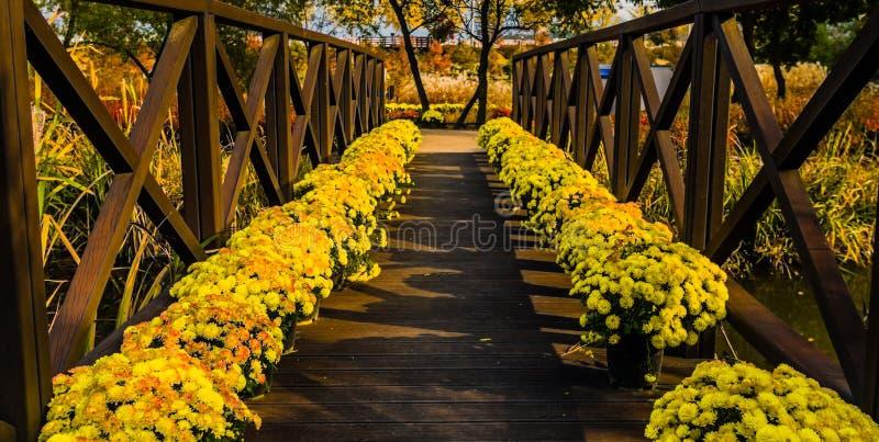 Желтые маргаритки на деревянном footbridge стоковое изображение rf