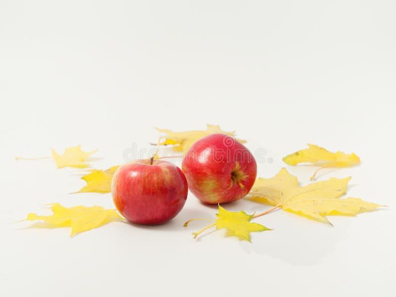 Желтые осенние листья с красными яблоками на белом фоне стоковые фото
