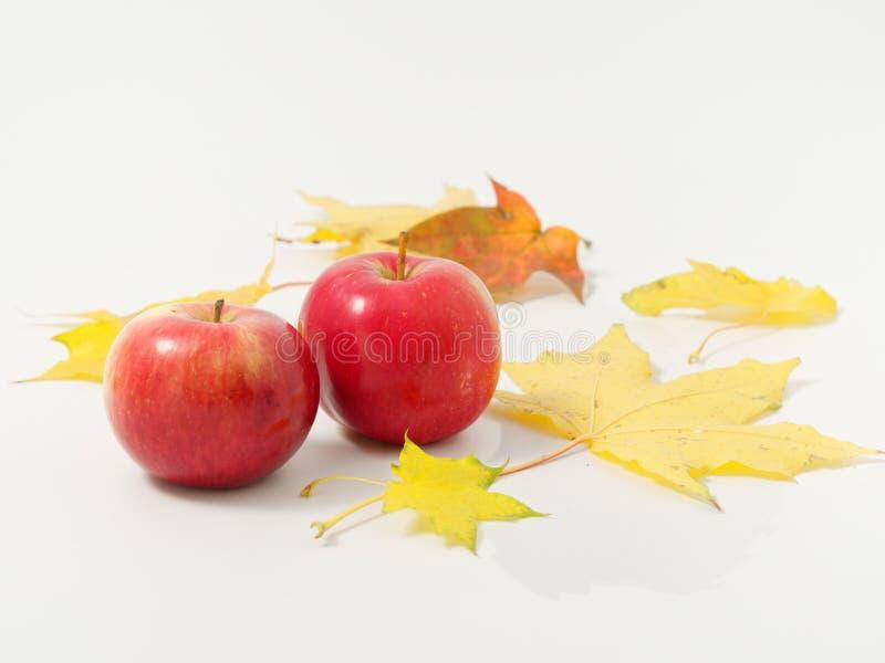Желтые осенние листья с красными яблоками на белом фоне стоковая фотография rf