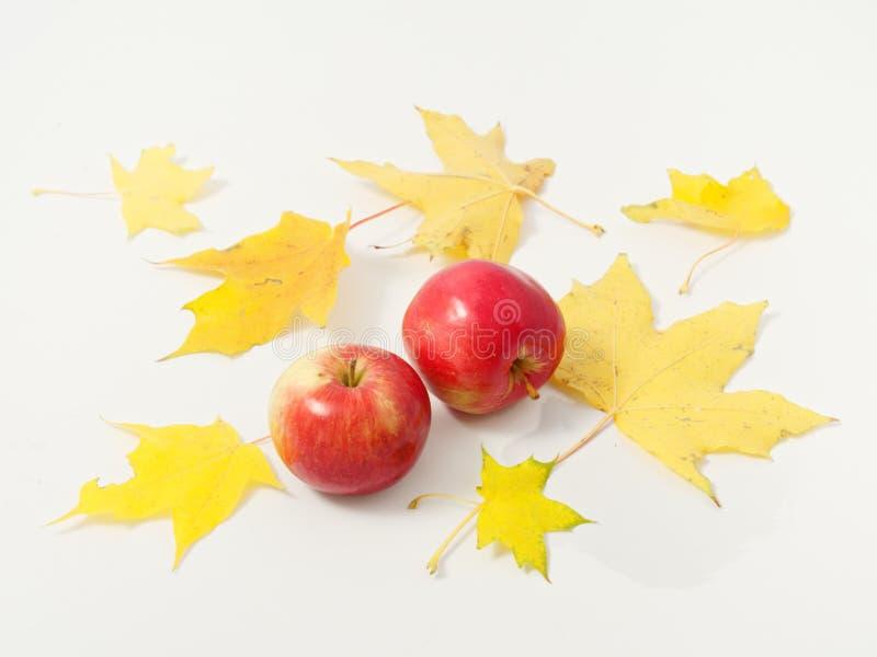Желтые осенние листья с красными яблоками на белом фоне стоковые фотографии rf