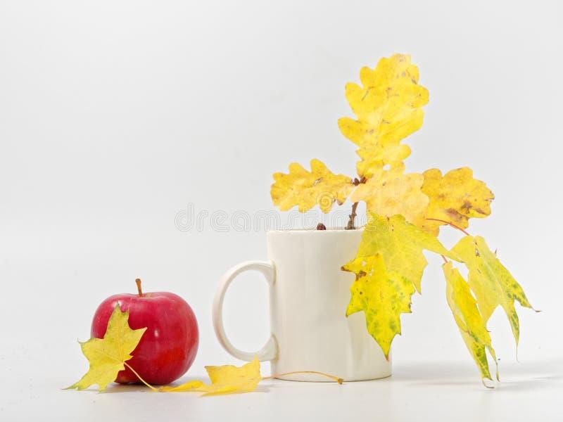 Желтые осенние листья с красными яблоками на белом фоне стоковое изображение