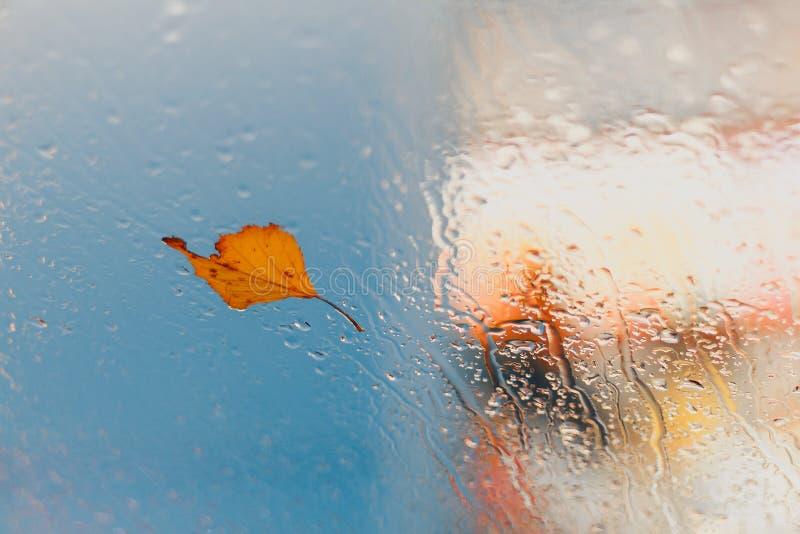 Желтые падения лист и дождя осени на стекле стоковые изображения rf