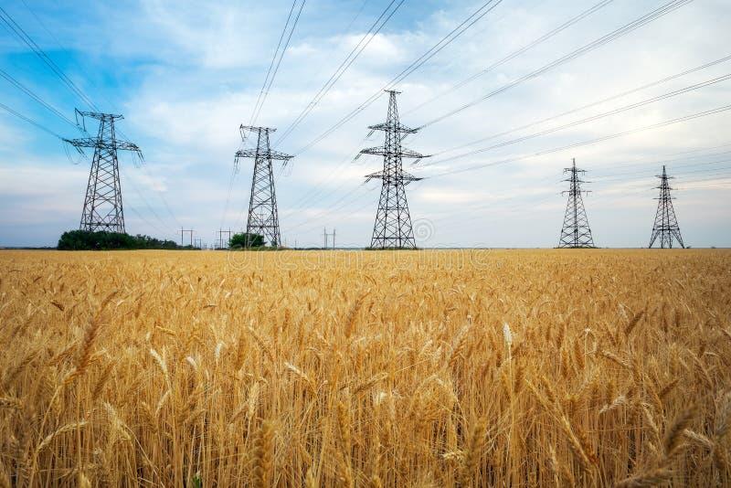 Желтые пшеница и линии электропередач стоковые фото