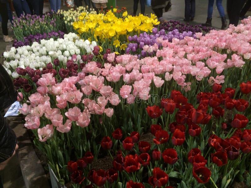 Желтые, розовые & красные тюльпаны стоковые изображения rf