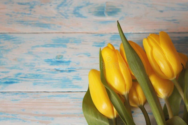 Желтые тюльпаны с зеленым концом-вверх листьев на голубой деревянной предпосылке Макрос стоковые изображения rf