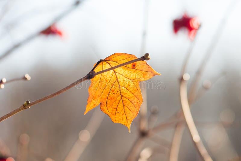 Желтые уединенные лист на ветви дерева в солнечном weather_ стоковая фотография rf