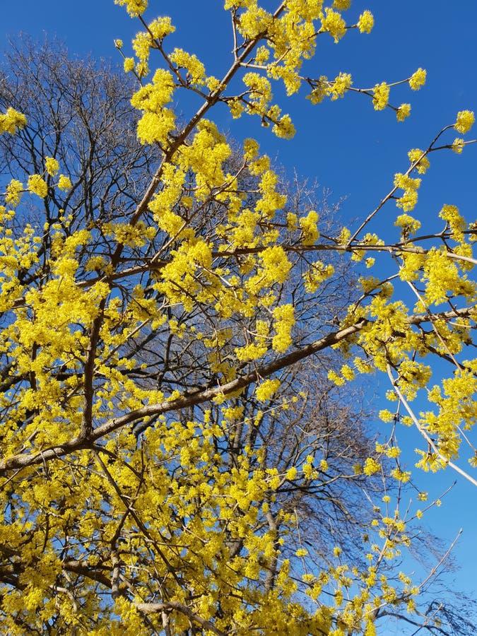 Желтые цветения стоковые изображения