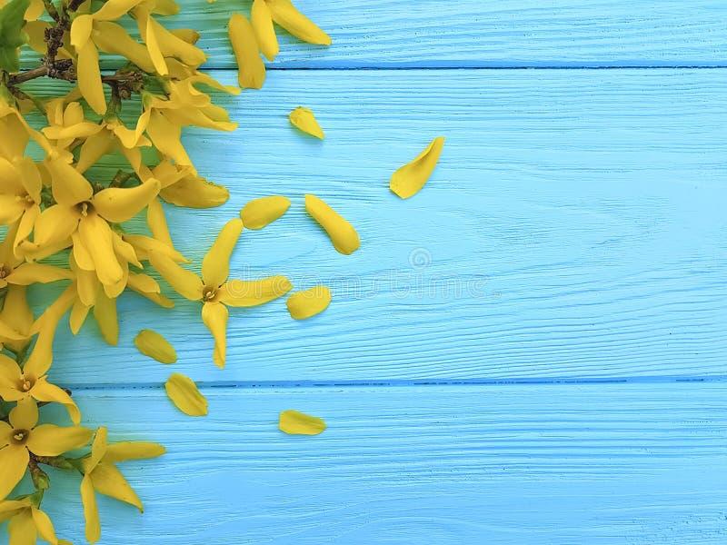 Желтые цветки весны сезонные на голубой деревянной предпосылке стоковое изображение rf