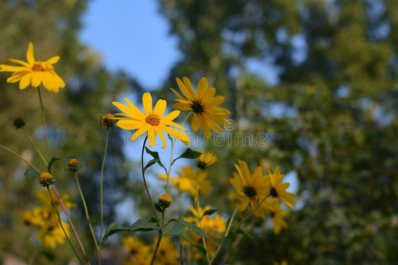 Желтые цветки в лесе стоковые фото