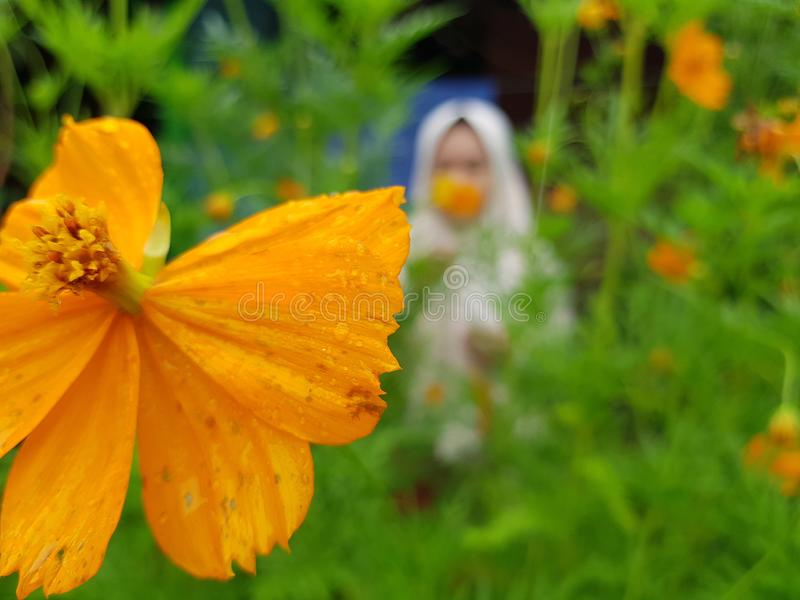 Желтые цветки в vilage стоковое фото