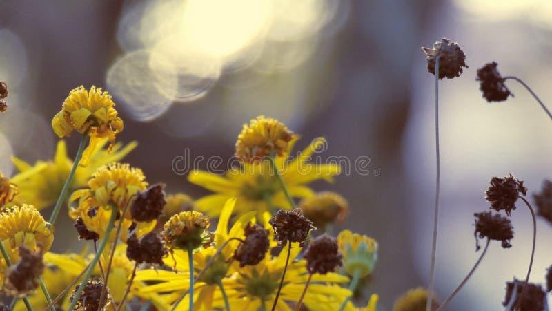 Желтые цветки с запачканной предпосылкой стоковое изображение rf