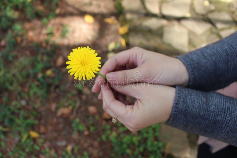 Желтые цветки стоковая фотография