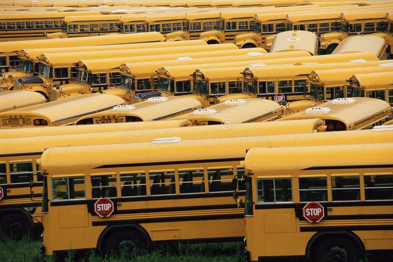 Желтые школьные автобусы стоковые фото