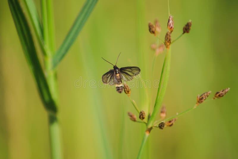 Желтые dragonflies на листьях в природе стоковые фотографии rf