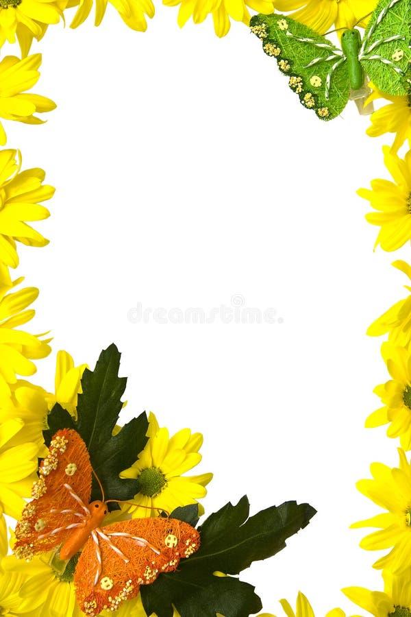Желтые marguerites стоковая фотография rf