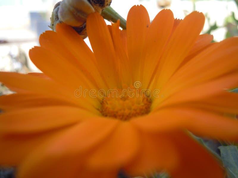 Желтый завод цветка солнцецвета от дома 321 стоковые изображения rf