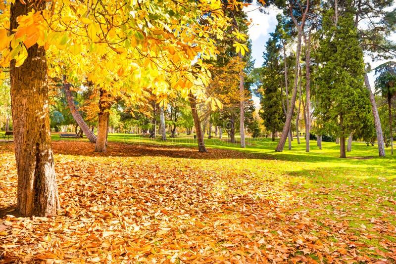 Желтый каштан в парке осени стоковое изображение rf