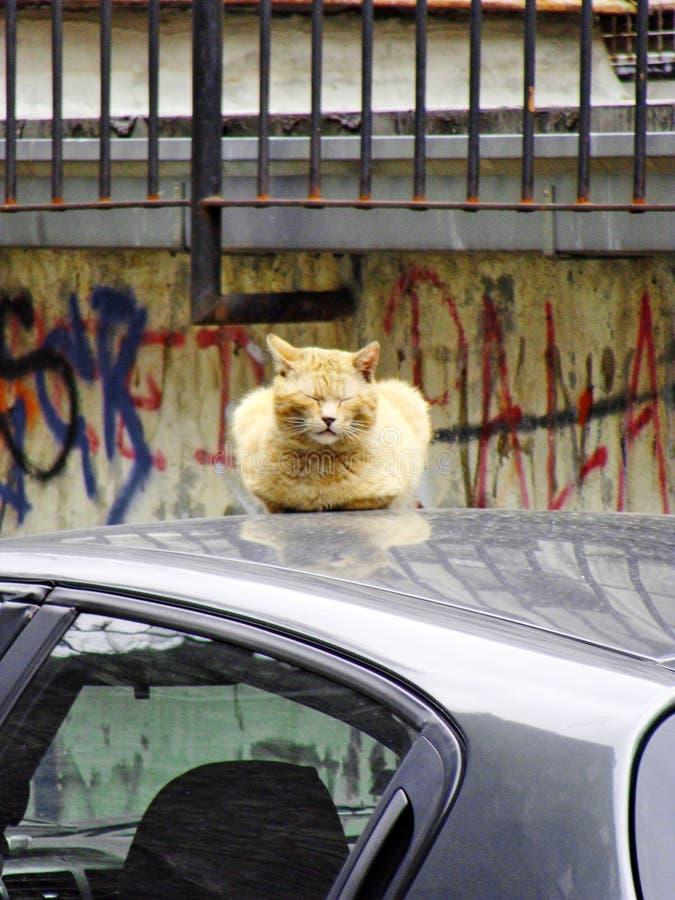 Желтый кот принимает остатки на крыше автомобиля стоковое изображение